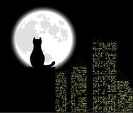 Grand chat de ville Photos libres de droits