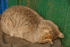 Grand chat gris dormant près du mur vert photos stock