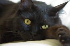 grand chat noir Photographie stock libre de droits