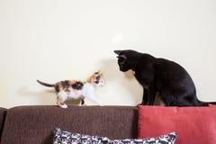 Grand chat noir et petit jouer rouge de chaton Image libre de droits