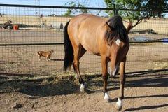 Grand cheval espagnol mangeant avec la réflexion du soleil images stock