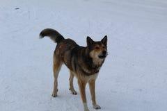 Grand chien, animal familier, meilleur ami du ` s d'homme sur la rue en hiver Image stock