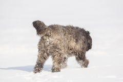 Grand chien avec de longs cheveux dans la neige Image stock