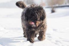 Grand chien avec de longs cheveux dans la neige Photo stock