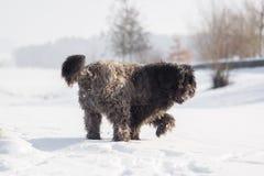 Grand chien avec de longs cheveux dans la neige Photo libre de droits