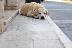 Grand chien de Brown se trouvant sur le trottoir Photo libre de droits