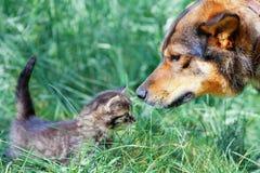 Grand chien et petit chaton Photo libre de droits