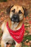 Grand chien mélangé de race en automne Images libres de droits