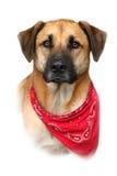 Grand chien mélangé de race sur le fond blanc Image stock