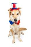 Grand chien mignon de croisement de Jour de la Déclaration d'Indépendance Image libre de droits