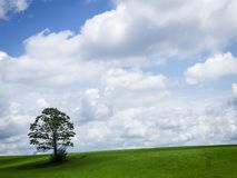Grand ciel et arbre solitaire Photos stock