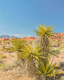 Grand Circle, Red Rock Canyon National Conservation Area, NV Royalty Free Stock Photo