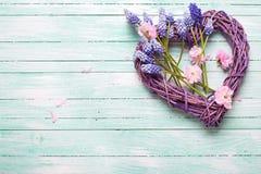 Grand coeur décoratif et fleurs d'amande et bleues roses de muscaries Photo stock