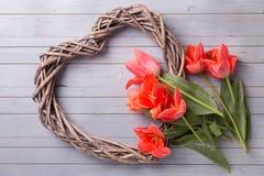Grand coeur décoratif et tulipes de corail aromatiques sur le painte gris Image stock