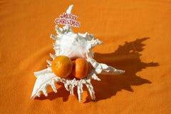 Grand coquillage avec trois mandarines à l'intérieur de lui image libre de droits