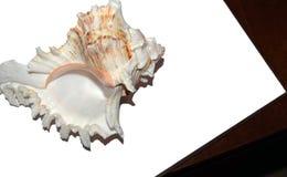 Grand coquillage sur le fond blanc photo libre de droits