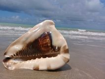 Grand coquillage sur le sable par la mer image stock