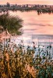 Grand coucher du soleil brumeux au-dessus de marais Image stock