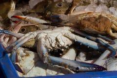 Grand crabe inférieur avec les griffes bleues Port de pêche dans l'Inde du sud Image stock
