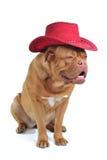 Grand crabot dans le chapeau de cowboy Photographie stock libre de droits