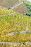 Grand cru vineyard of Cote Rotie. In Rhone-Alpes, France Stock Photography
