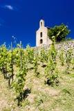 Grand cru vineyards Royalty Free Stock Photography