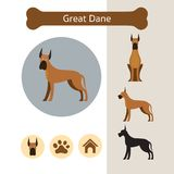 Grand Dane Dog Breed Infographic illustration de vecteur