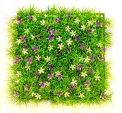 Grand dos d'herbe photo stock