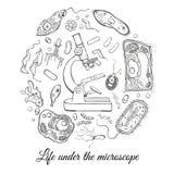 Grand ensemble avec le microscope et les différents micro-organismes Image libre de droits