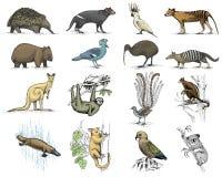 Grand ensemble d'Australien et de symboles de la Nouvelle Zélande, animal gravé, vecteur tiré par la main, vintage dessinant le l Images stock