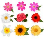 Grand ensemble de belles fleurs colorées. illustration stock