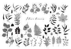 Grand ensemble de branches et de feuilles, chute, ressort, été Illustration botanique de vecteur de vintage, éléments floraux dan illustration stock