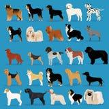Grand ensemble de chiens Photo libre de droits