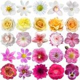 Grand ensemble de diverses fleurs photos stock