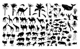 Grand ensemble de silhouettes d'animaux Ensemble animal noir illustration stock
