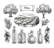 Grand ensemble olive illustration de vecteur