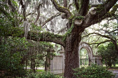 Grand entrance. Gorgeous plantation entrance in Savannah, GA stock image