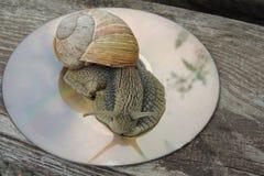 Grand escargot dans le jardin sur un fond brillant Photos libres de droits