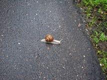 Grand escargot rampant sur le trottoir d'asphalte Images stock
