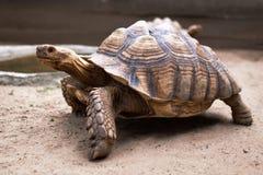 Grand et vieux turtlein le zoo Photo stock