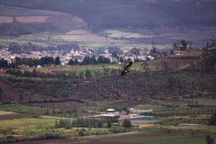 Grand faucon montant au-dessus du villiage de vallée photographie stock