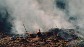 Grand feu avec des brindilles et des firewoods Vue en gros plan de forêt brûlante banque de vidéos