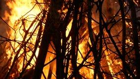 Grand feu de camp à l'obscurité banque de vidéos