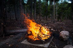 Grand feu de camp flamboyant dans une forêt Images libres de droits