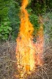 Grand feu lumineux tout en brûlant un grand nombre de branches de déchets images stock