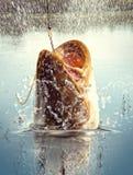 grand fleuve de poisson-chat Photographie stock libre de droits