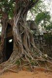 Grand fond d'arbre Photo libre de droits