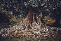 Grand fond d'arbre Photos libres de droits
