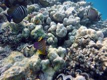 Grand fond de la mer de récif coralien image libre de droits