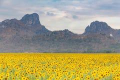 Grand gisement de tournesol de pleine floraison avec le fond de montagne Photo libre de droits